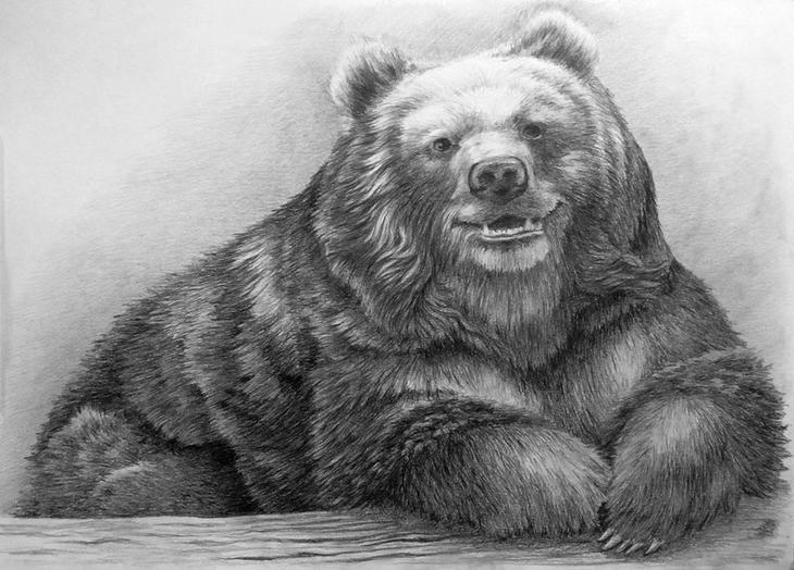 рисунки медведя карандашом этой процедуре