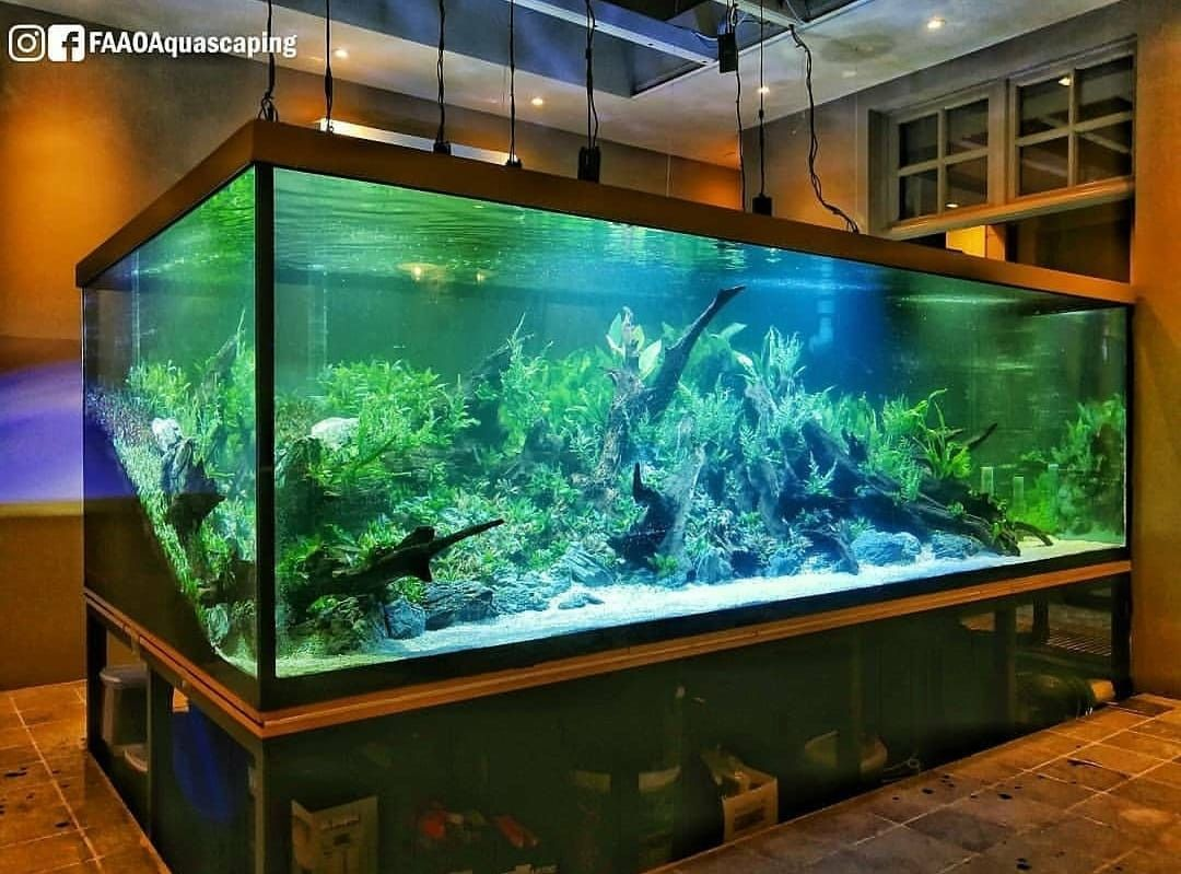 Pin By Brenden Smith On Freshwater Aquarium Designs Aquarium Fish Tank Fish Tank Aquarium Fish