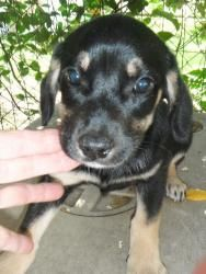 Adopt Kimiko On Puppy Pictures Dachshund Mix Dachshund