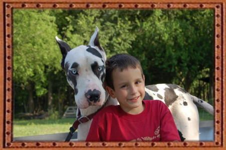 Texas Great Danes Great Dane Puppies For Sale Texas Tx Great Danes