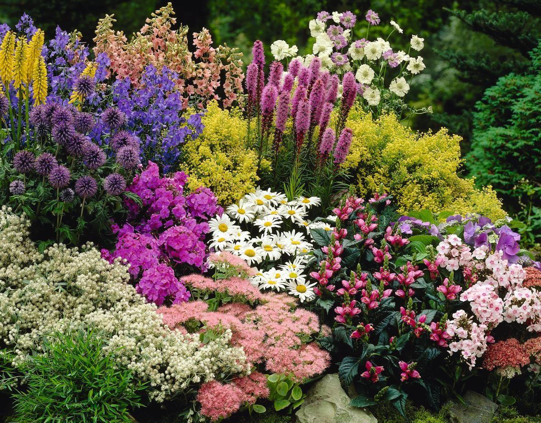 Math Goes Gardening Dividing Your Perennials Gardening