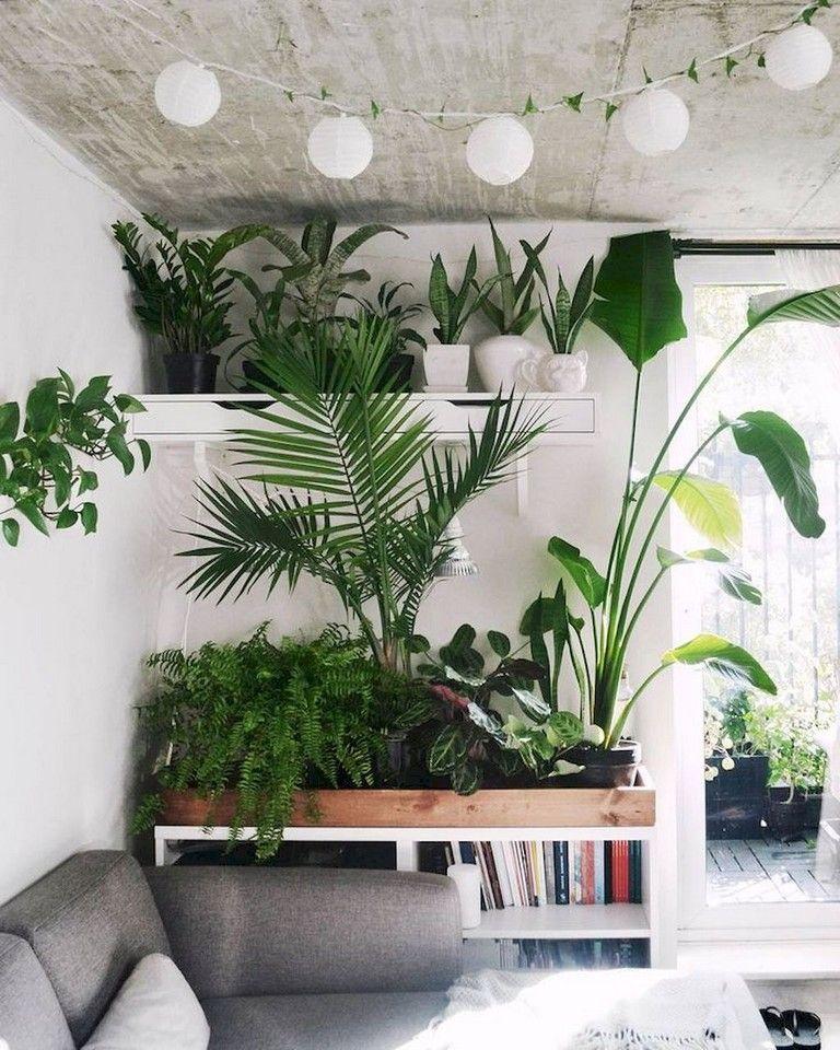 Smart Ideas To Display Indoor Plants
