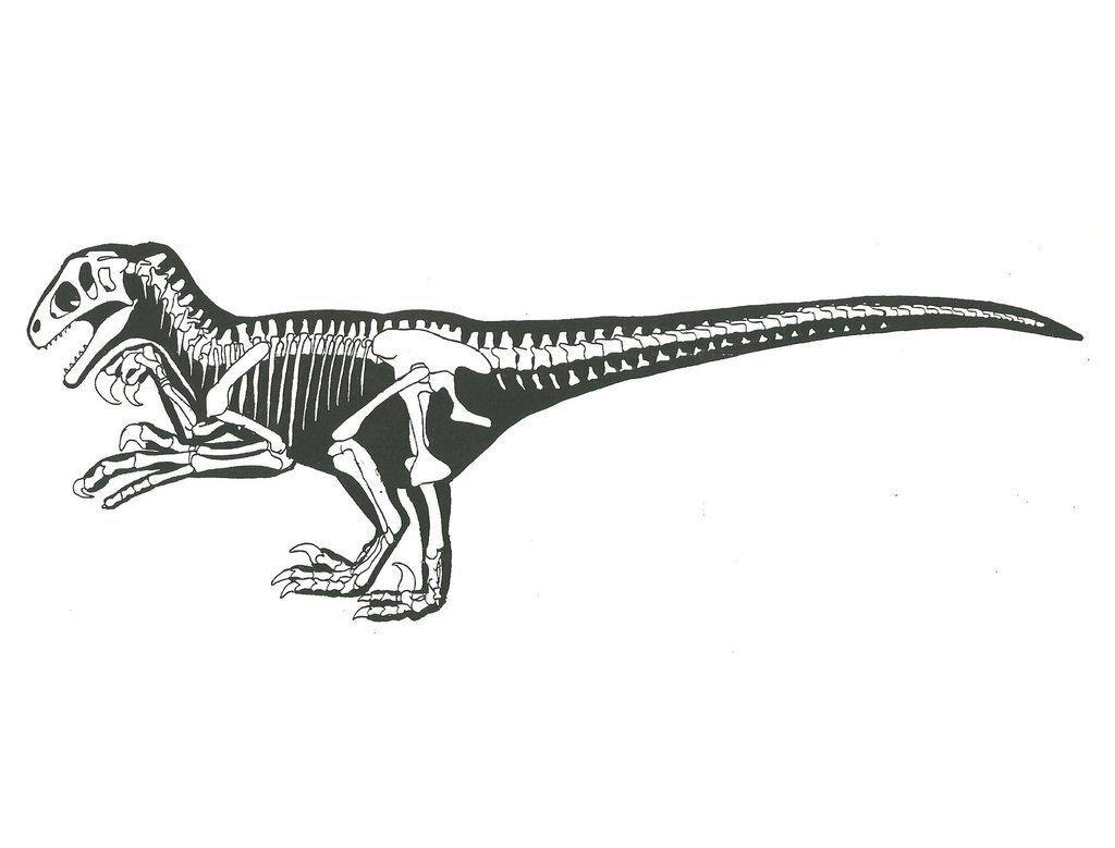Utahraptor Skeleton Outline By Sprywolf Deviantart Com Dinosaur