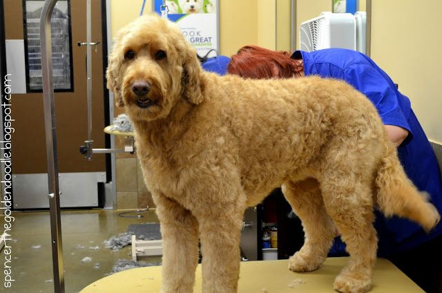 Pamper Your Pet At Petsmart Petsmartgrooming Petsmart Grooming Goldendoodle Petsmart