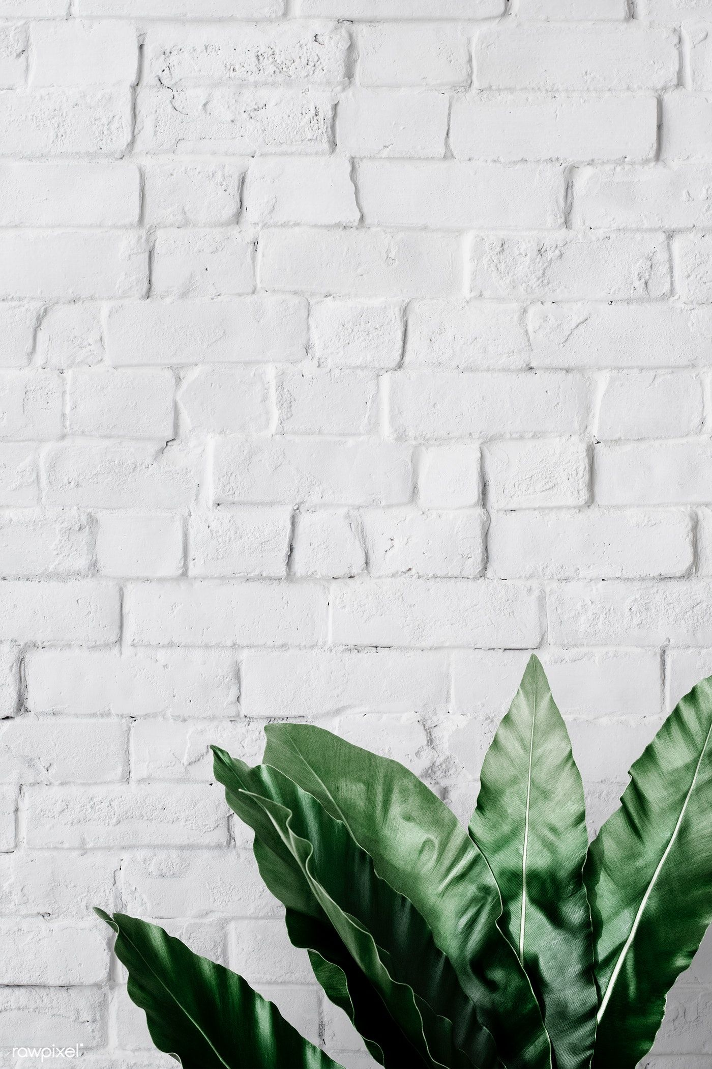 Download Premium Psd Of Bird S Nest Fern On White Brick Wall 556181 Brick Wallpaper Iphone White Brick Wallpaper White Brick Walls