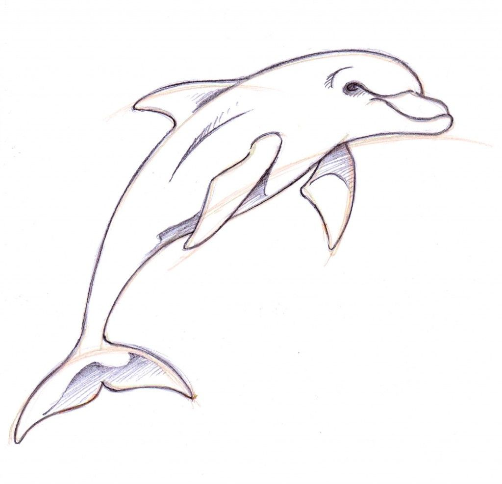 Uncategorized Simple Dolphin Drawing dolphin drawings in pencil how to draw a drawing ideas dolphin