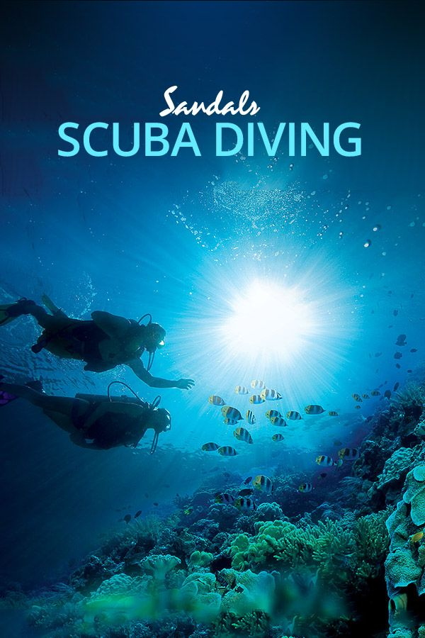Enjoy The Perfect All Inclusive Scuba Diving Vacation In