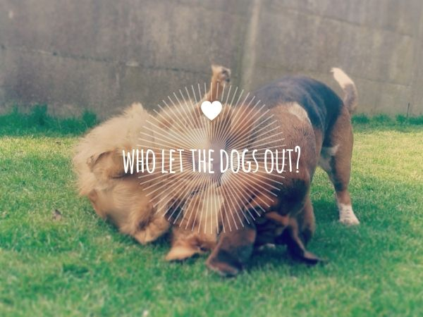 who let the dogs out?
