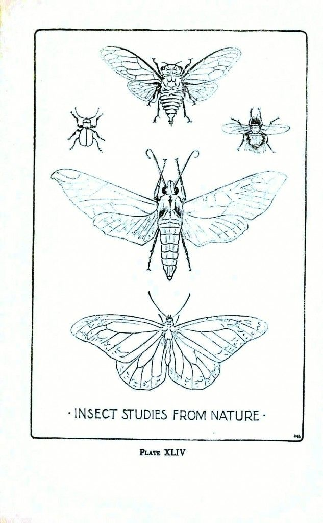 drawings of insects | Animal - Insect - Insect line drawings