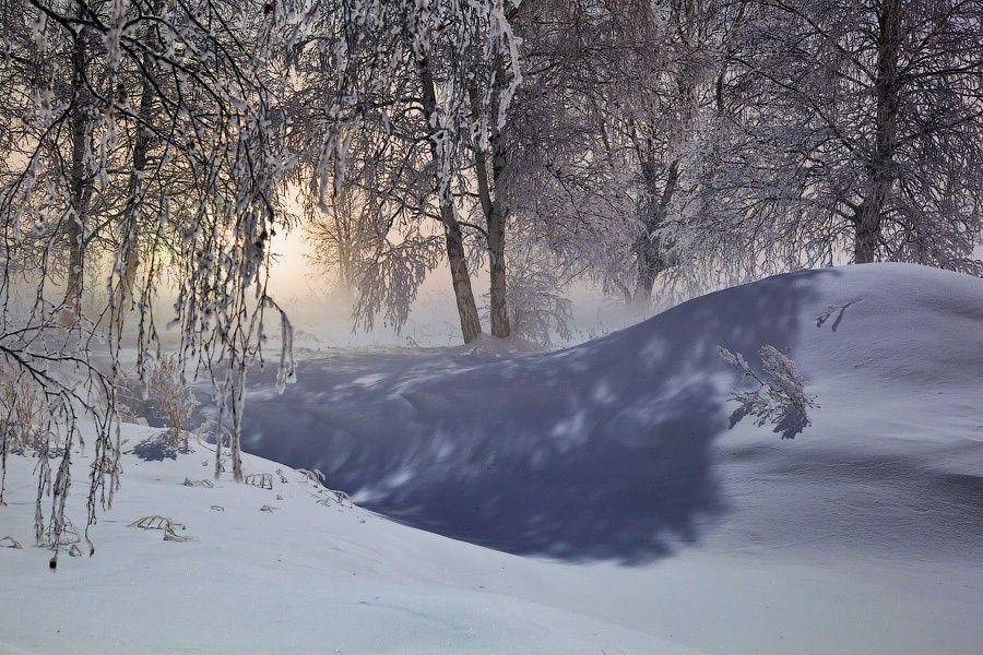 NIght forest by Alexei Mikhailov