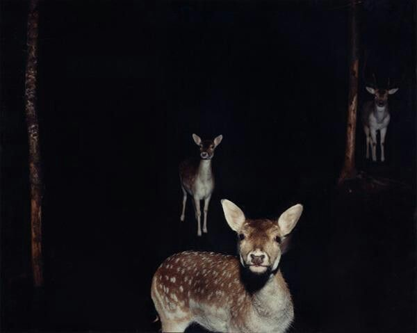 3 deer in a forest - low light