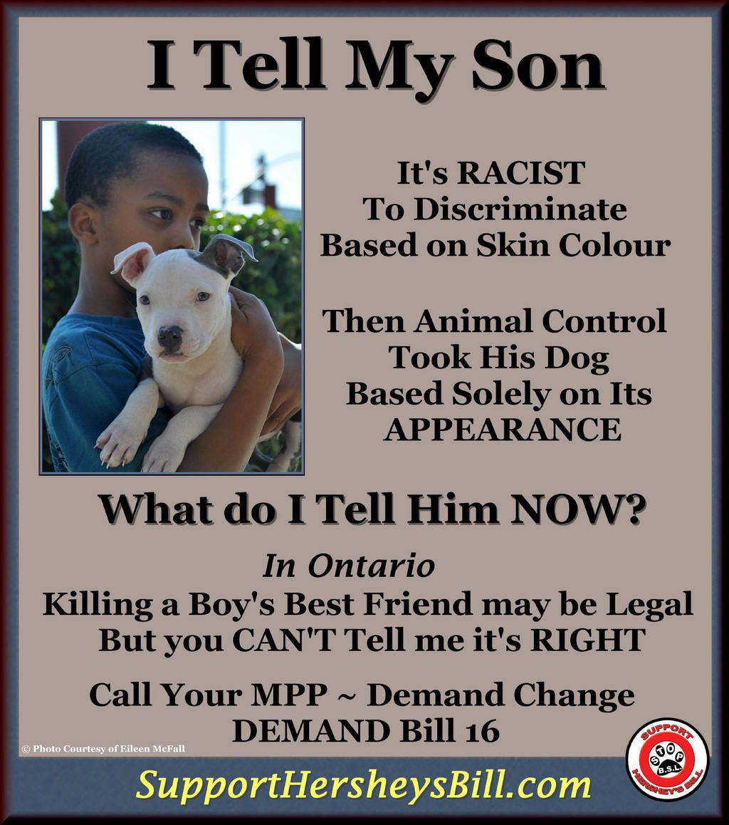 BSL is like racism applied to dogs. It has been illegal for a Pit Bull type dogs to live in Ontario, Canada since 2005.   All Pit Bull type dogs are automatically destroyed or sent to research facilities.   Hersey's Bill  would get rid of BSL in Ontario.   supporthersheysbi...