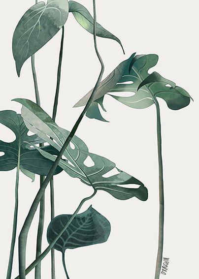Botanic Illustration - Agata Wierzbicka