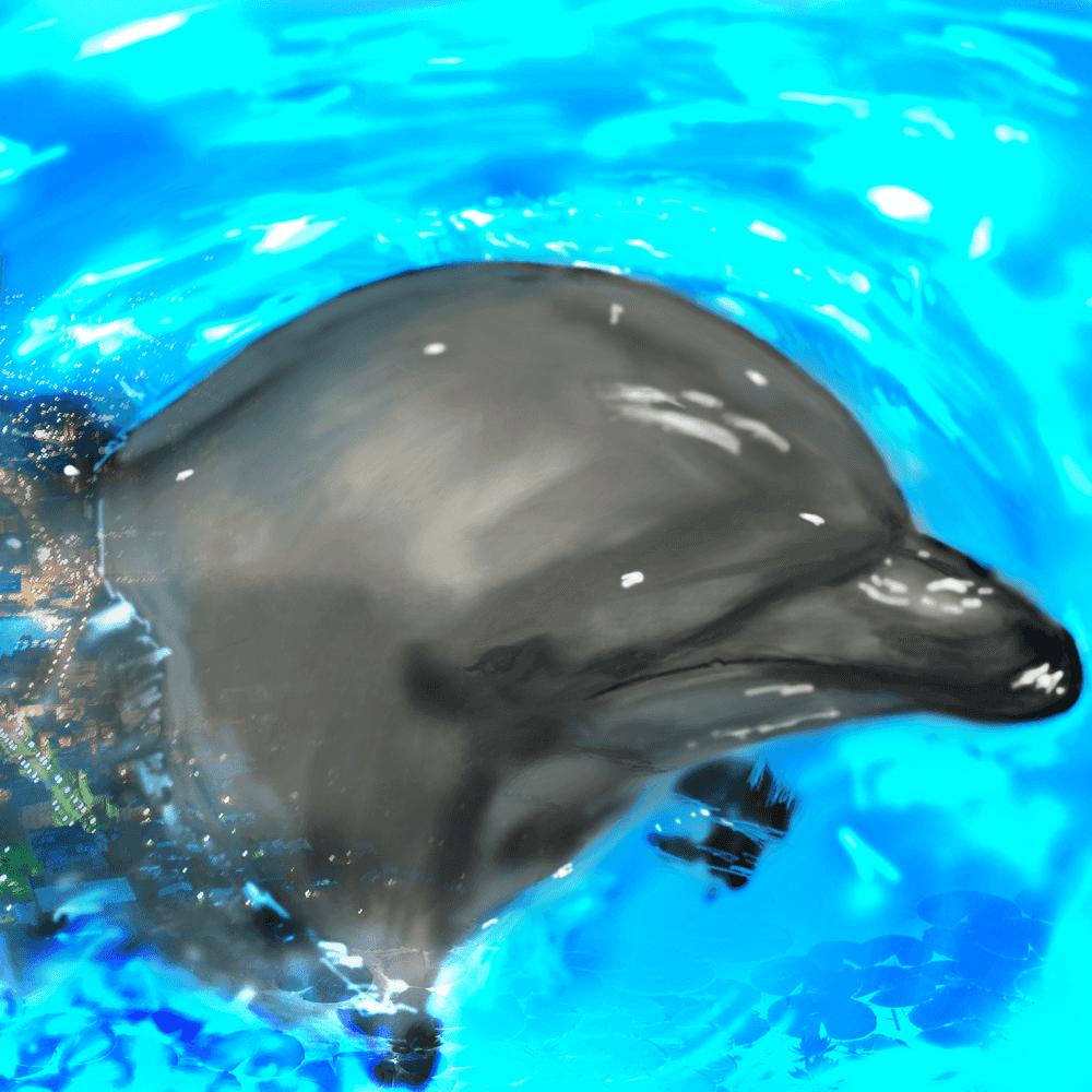 イルカの可愛い無料で使えるフリーイラスト イルカ イラスト シャチ イラスト 動物