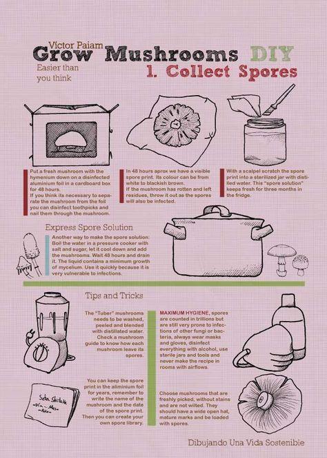 Growing mushrooms infographics Infografía - Cultiva setas en casa