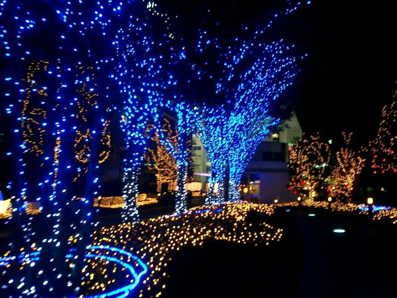 White Lights Along The House Trim And Blue Lights On The Trees Blue Christmas Lights White Christmas Lights Outdoor Led Christmas Lights