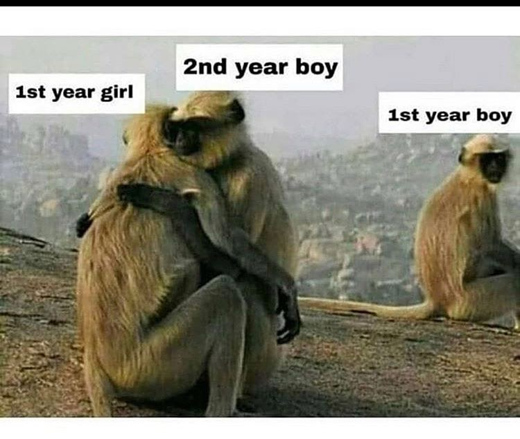 Instagram Photo Download Online Dinsta Com Funny Memes Twitter Funny Memes