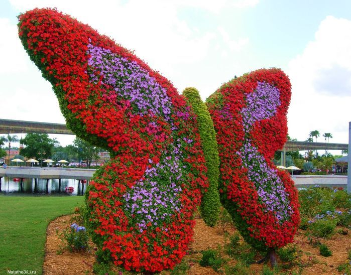 First Butterfly Garden In #Dubai Miracle Garden Will Open For Visitors In  30 45
