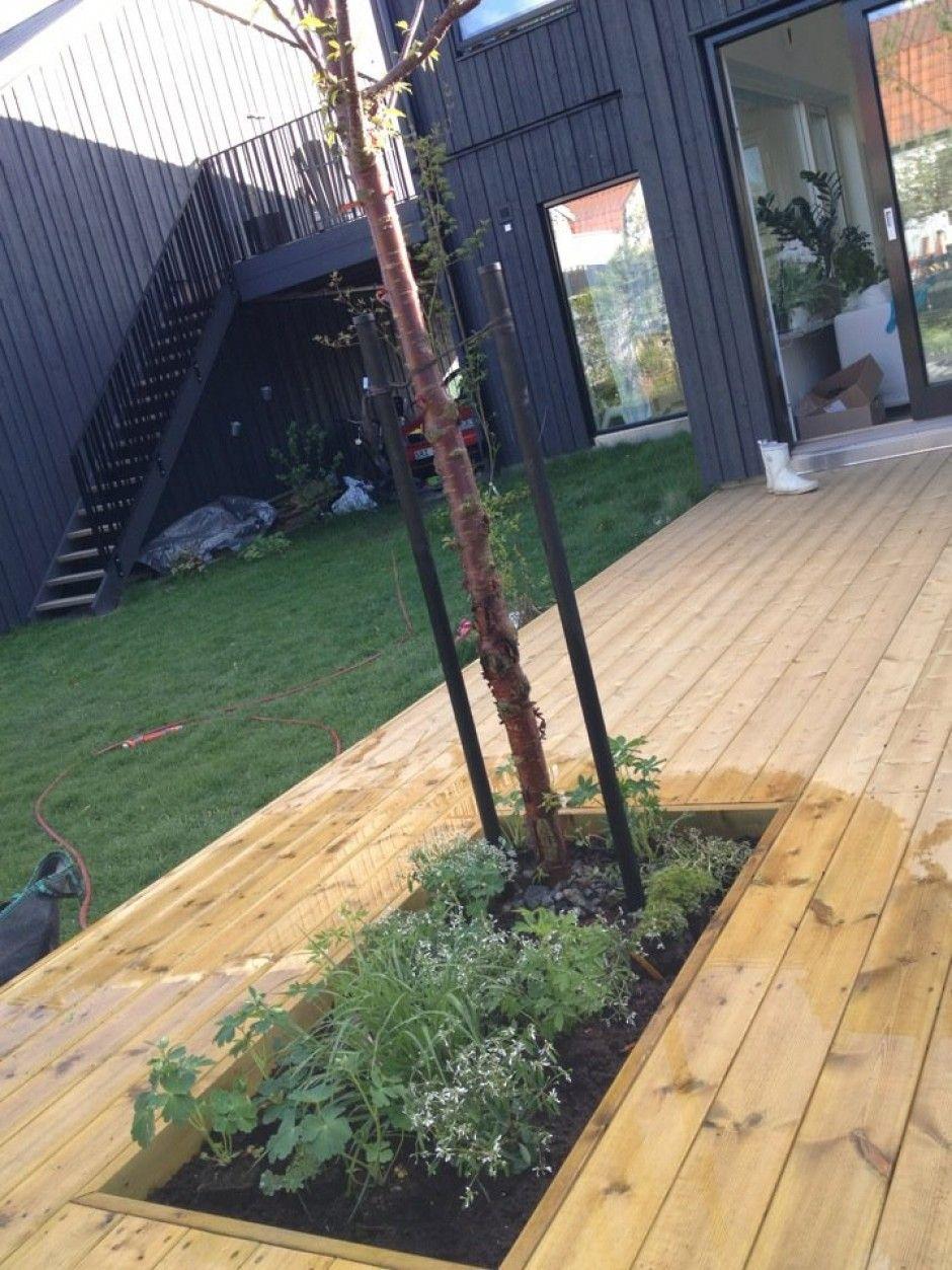 Bildresultat för bygga altan med träd Utomhus Pinterest Träd, Utomhus och Hus