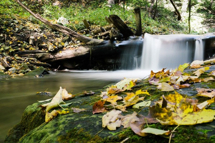 Foliage and Waterfall *1736 by Mark Shannon on 500px