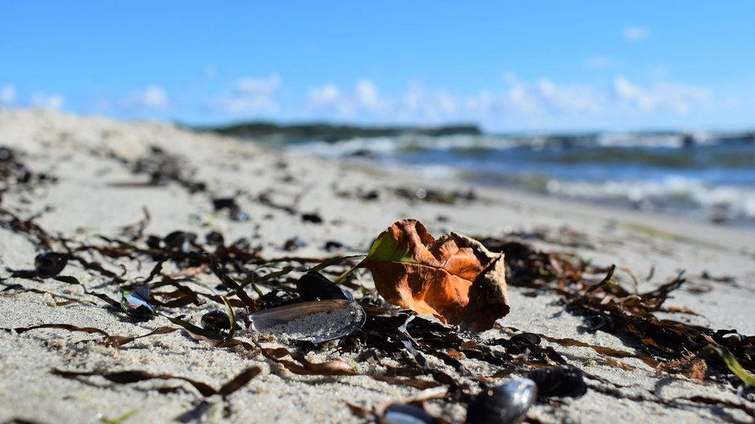 Laub und Algen liegen am Strand