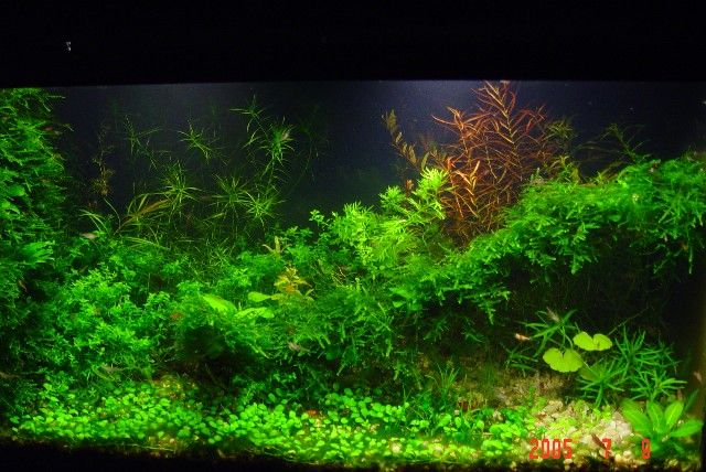the planted tank guide pdf