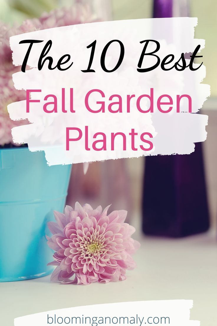 Create an autumn look in your garden with the flowers and plants you grow there. Sunflowers, marigolds, and chrysanthemums are just a few of the popular fall flowers you can grow. Click on the pin to learn more about the 10 best fall garden plants. #fallgarden