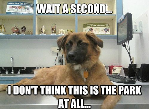 Top 44 Funny Dog Memes Funny Animals Funny Dogs Funny Dog Memes