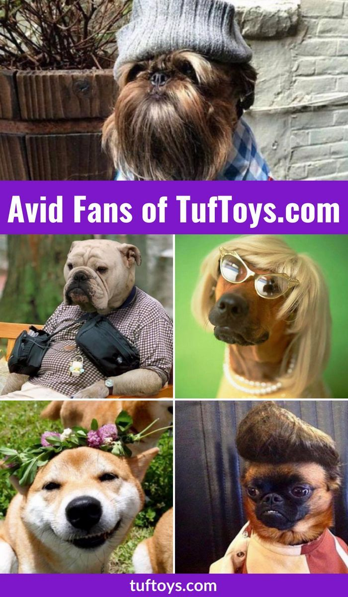 Avid fans of tuftoys funny pics of puppys and doggys with big