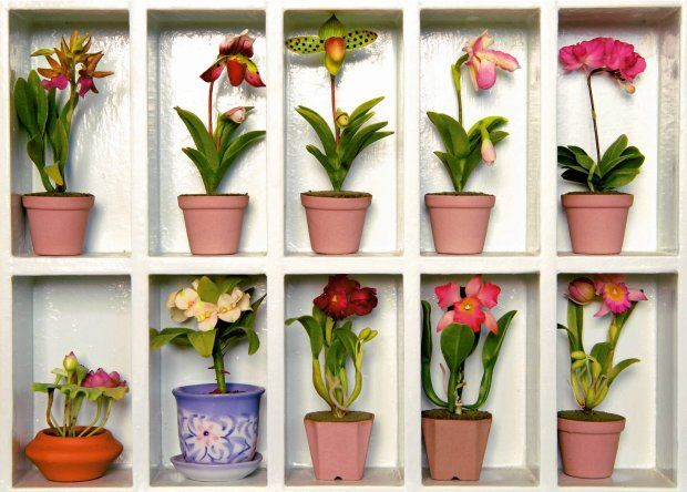 Kwiaty Na Polce Plants Planter Pots Planters