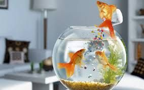 Fish Aquarium Delivery In Hyderabad India As Gifts For Birthday Send To