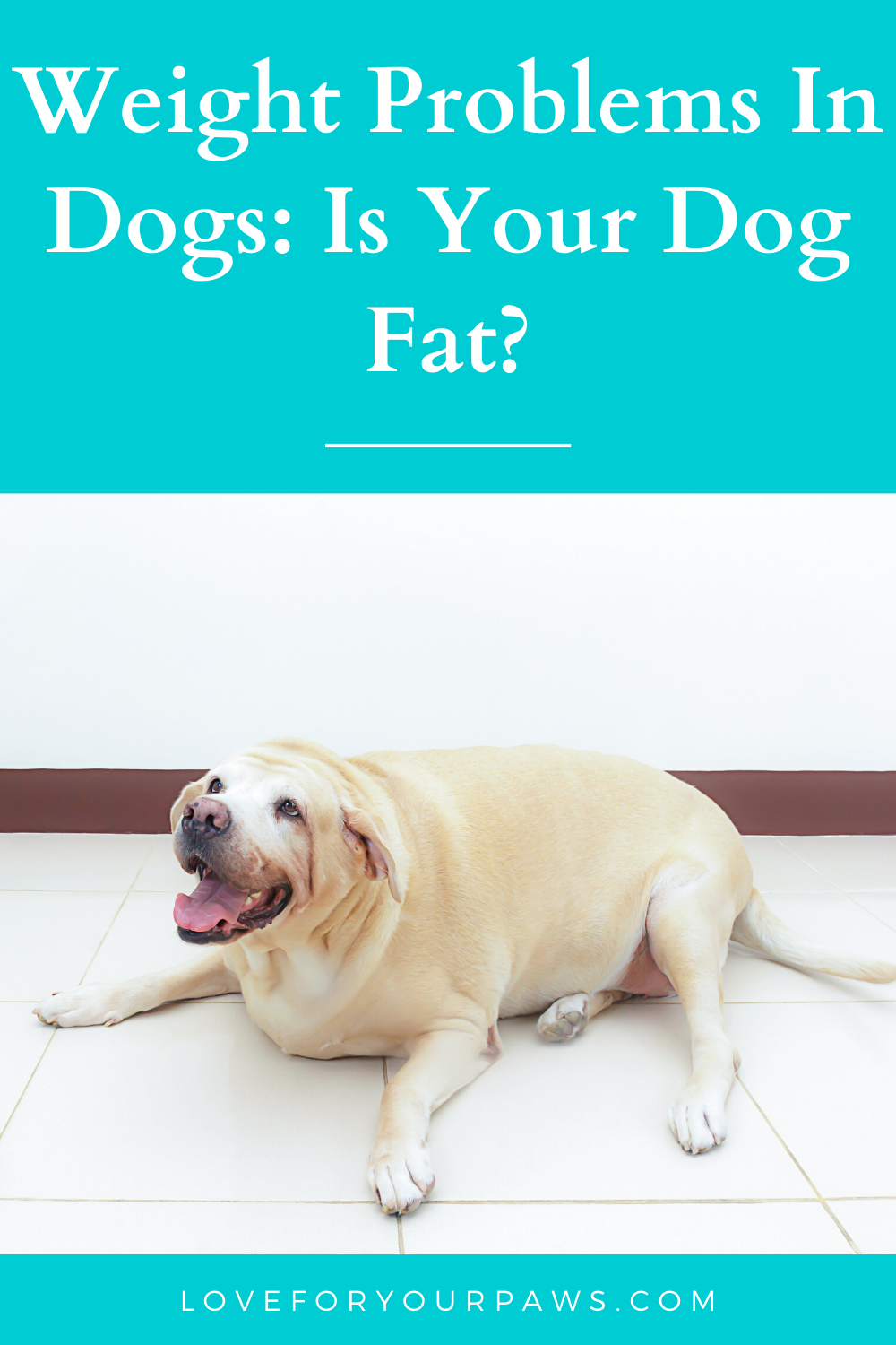 624bf3dfd458fe39ce70cb5d70faea69 - How To Get My Overweight Dog To Lose Weight