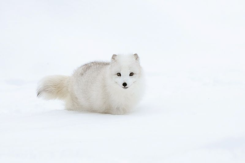 baby fox -Please check the website for more