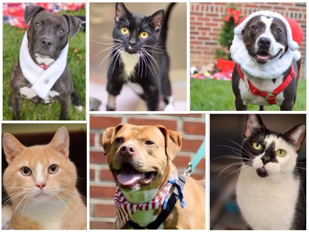 PSPCA Offers Special Holiday Discount On Pet Adoptions