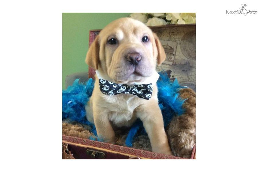 Bram Mixed Other Puppy For Sale Near Jacksonville Florida
