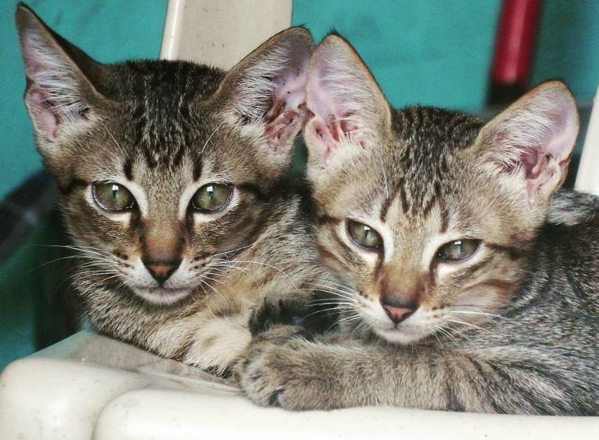 160 Twin Cat Names Cat Names Cats Pretty Cats