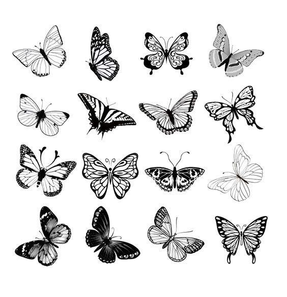 Photo of Schmetterlinge, einfach, aber wunderschön und anmutig, repräsentieren eine per…