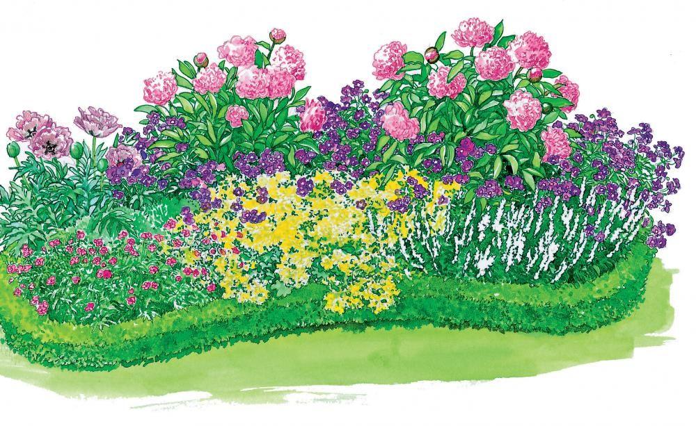 drei staudenbeete einfach nachgepflanzt garten pinterest buchsbaumhecke katzenminze und. Black Bedroom Furniture Sets. Home Design Ideas