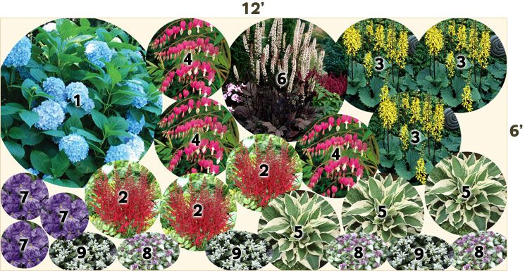 Pre planned perennial garden layout hydrangea all summer for Shade garden design zone 5