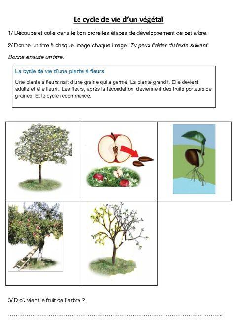 cycle de vie d'un végétal - le pommier – exercices - ce2 - cm1
