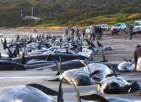 polluted water kills marine life