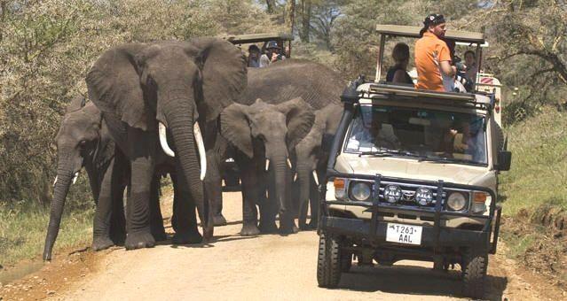 tanzania safari pinterest tanzania safari, tanzania and wildlifetanzania safari holiday booking need proper plans like wildlife safari itineraries