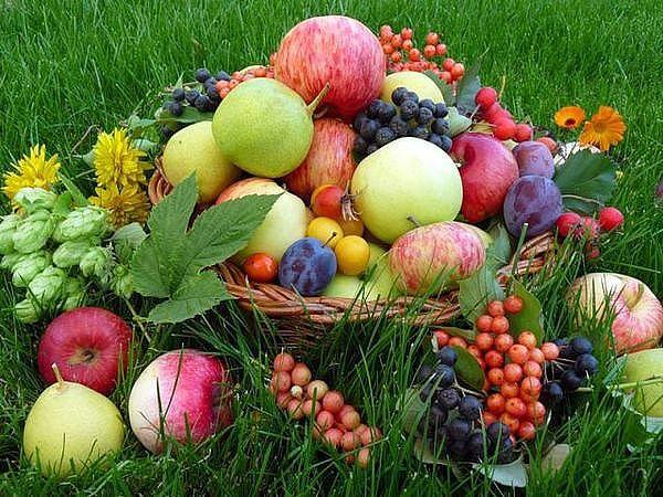 Секрет долголетия : ешьте больше фруктов и меньше – друг ...  Фруктовый Сад Обои