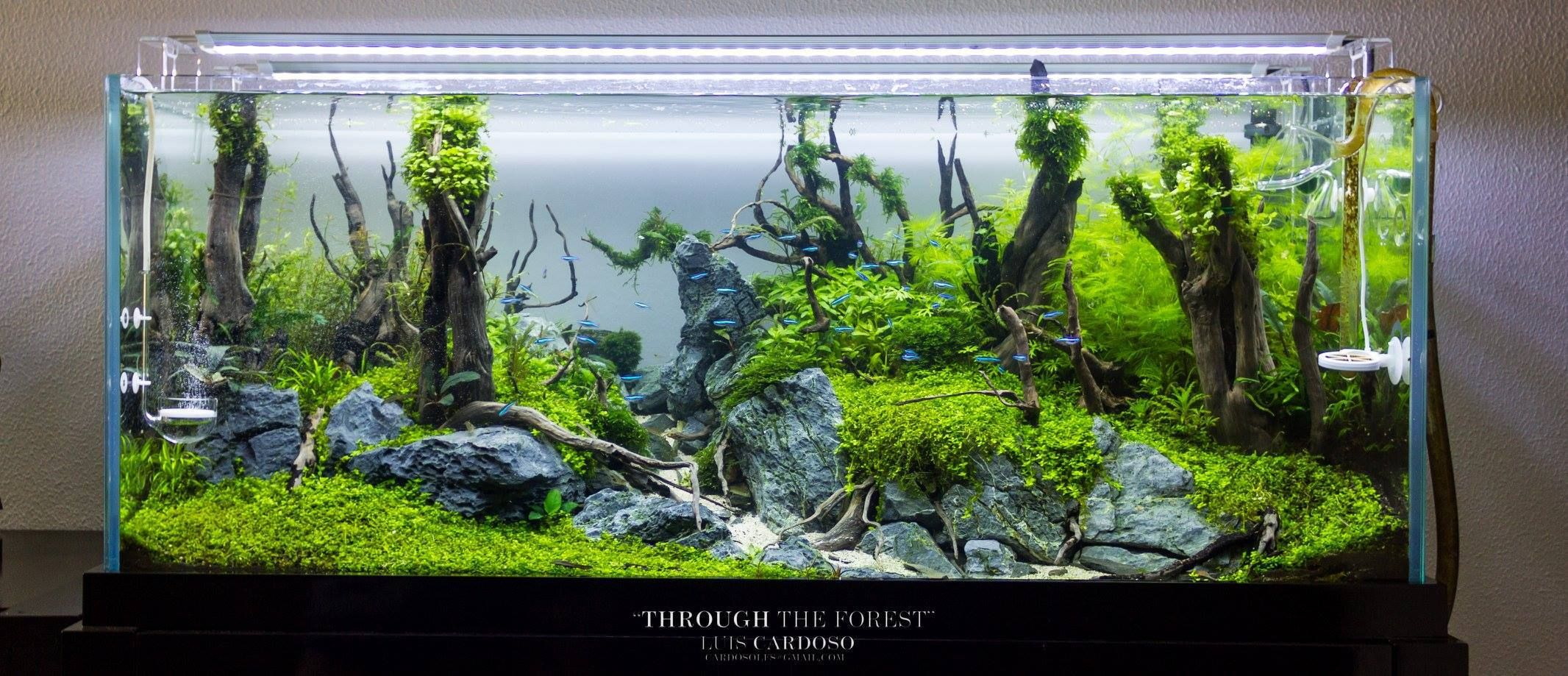 AQUASCAPE IDEA 6 | Aquascape, Live aquarium plants, Nature ...