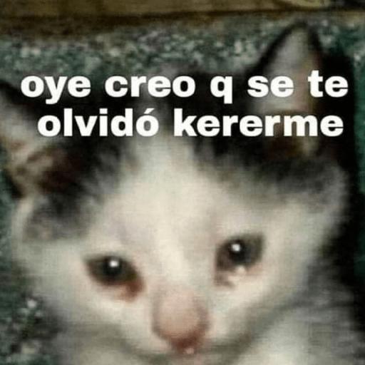 Stikers De Amor De Gatitos En 2020 Memes Memes Romanticos Memes De Animales Divertidos