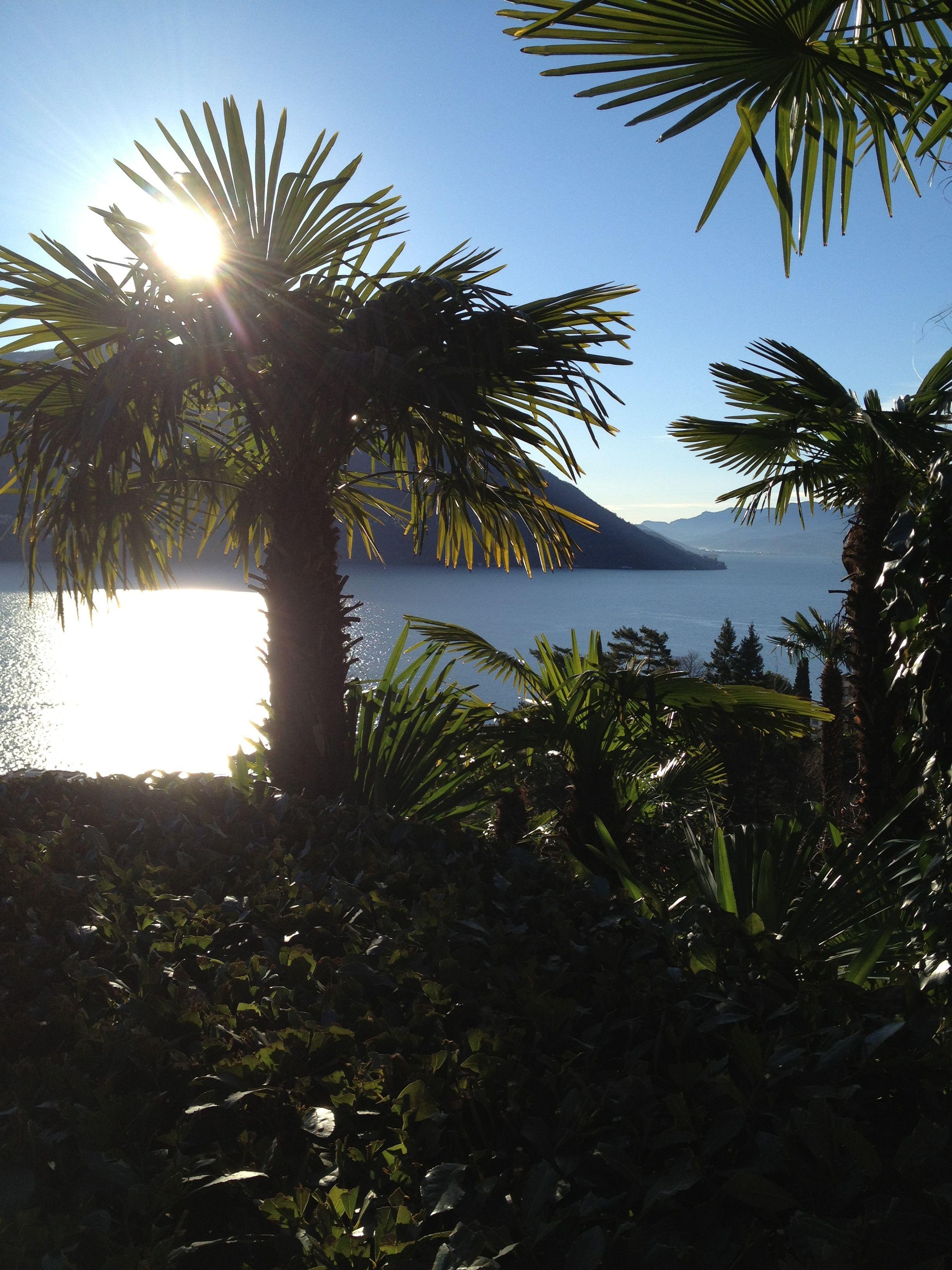 Resort Reka Brissago in December. Ticino Lake Maggiore