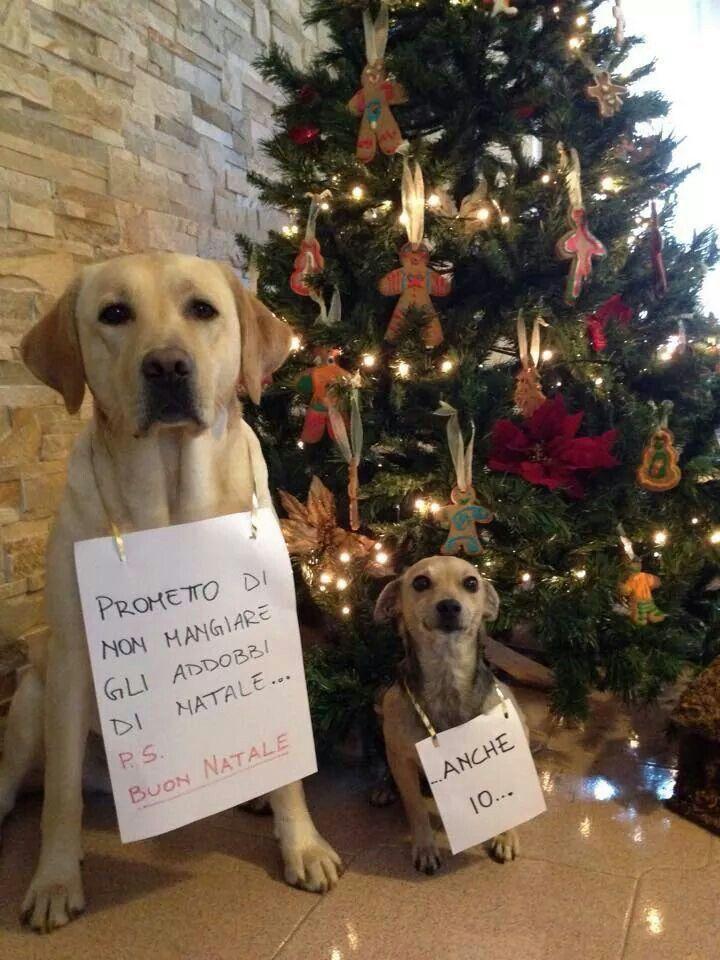 Immagini Divertenti Animali Natale.Va Bene Staremo A Vedere Citazioni Sugli Animali Domestici Foto Di Cani Divertenti Cane Natale