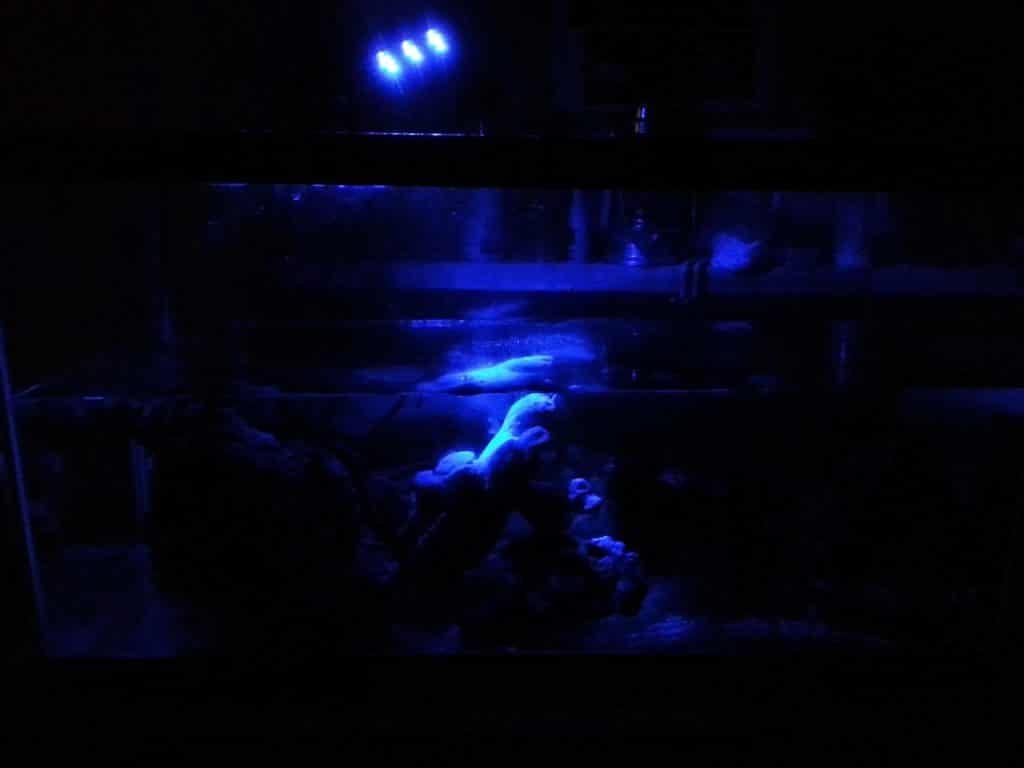Moon Light aquarium led verlichting is een spektakel in het aquarium ...