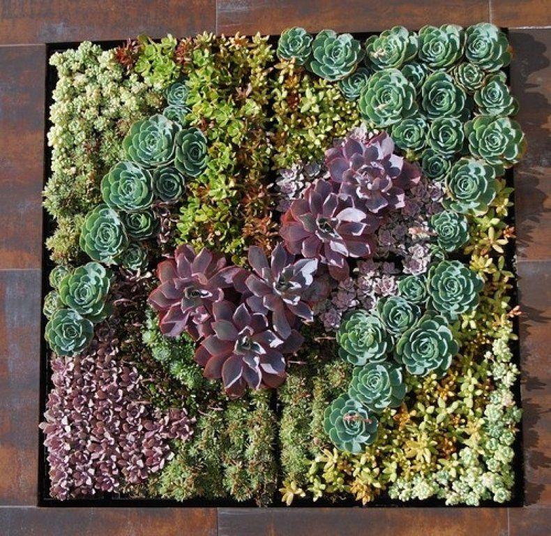 Jardineria con cactus y suculentas buscar con google - Plantas suculentas colgantes ...