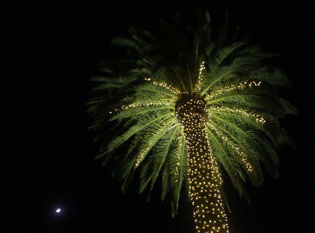 Christmas lights, palm tree Oh so Christmas! Pinterest Trees